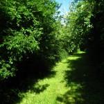 huisje-frankrijk-omgeving-bos